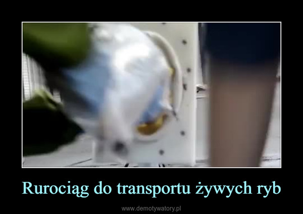 Rurociąg do transportu żywych ryb –