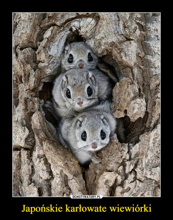 Japońskie karłowate wiewiórki –