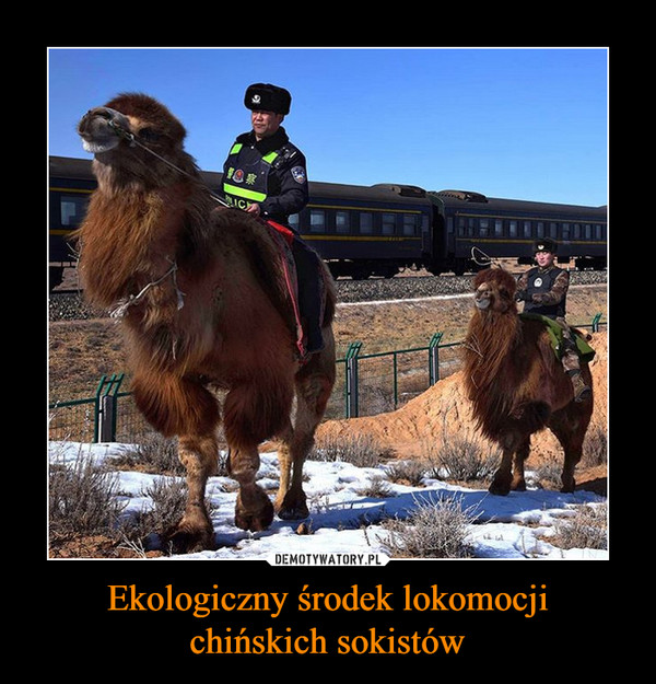 Ekologiczny środek lokomocjichińskich sokistów –