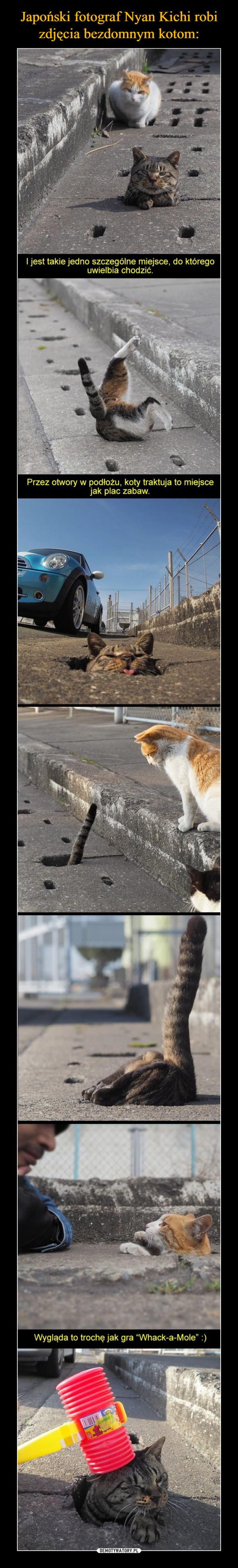 –  I jest takie Jedno szczególne miejsce, do którego uwielbia chodzićPrzez otwory w podłożu, koty traktują to miejsce jako plac zabaw