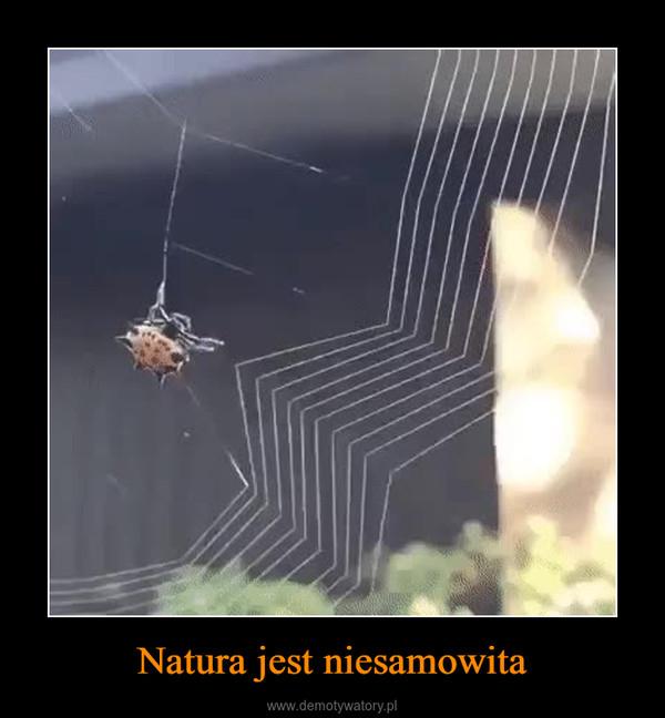 Natura jest niesamowita –