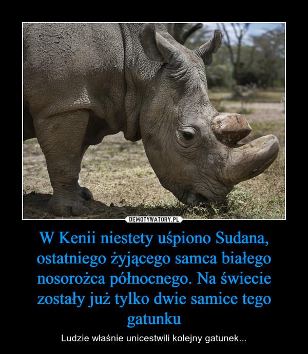 W Kenii niestety uśpiono Sudana, ostatniego żyjącego samca białego nosorożca północnego. Na świecie zostały już tylko dwie samice tego gatunku – Ludzie właśnie unicestwili kolejny gatunek...