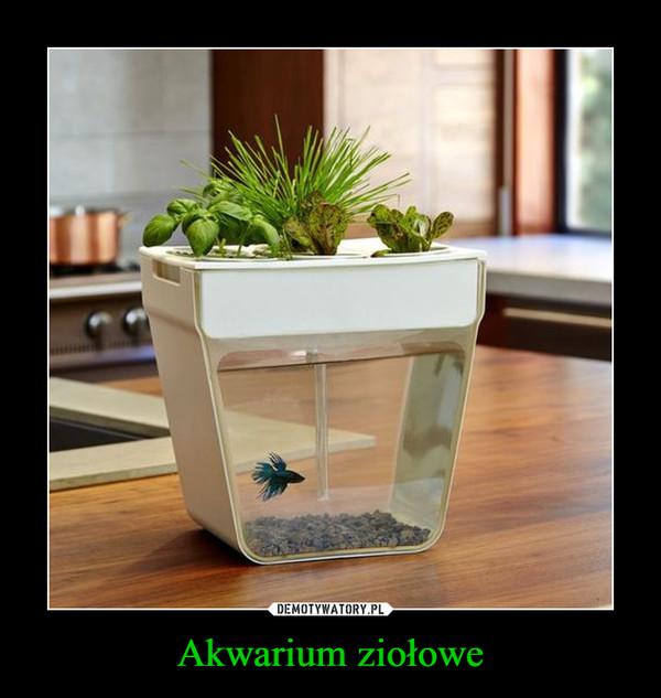 Akwarium ziołowe –