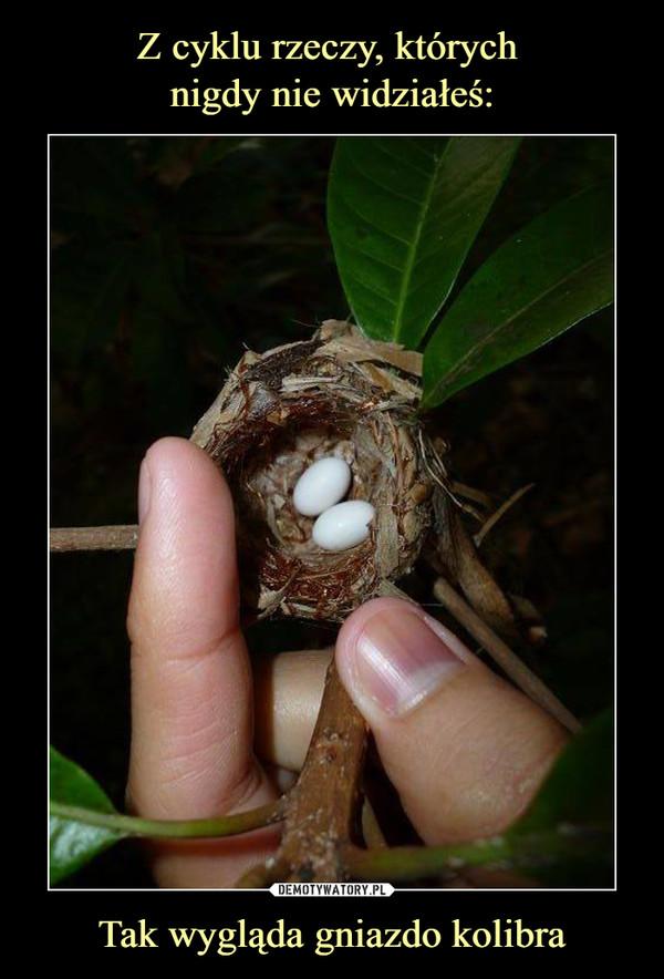 Tak wygląda gniazdo kolibra –