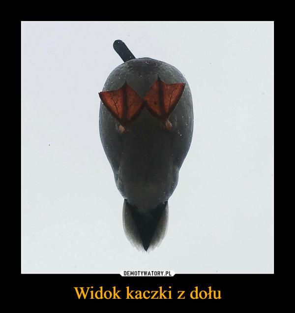 Widok kaczki z dołu –