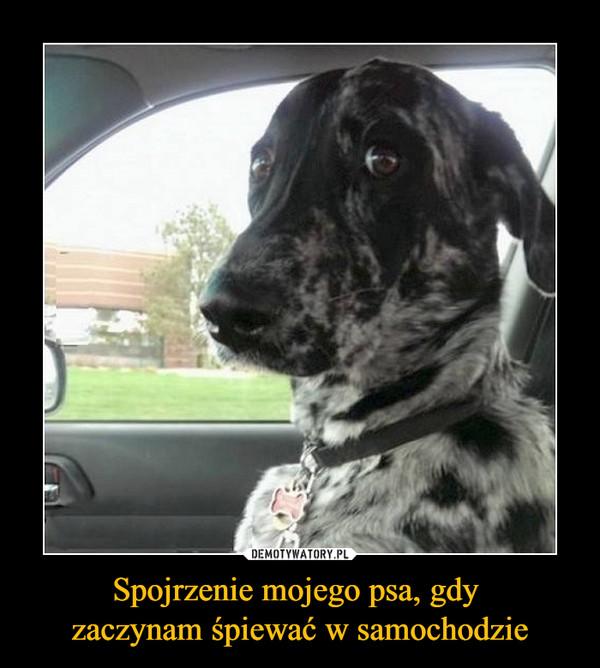 Spojrzenie mojego psa, gdy zaczynam śpiewać w samochodzie –