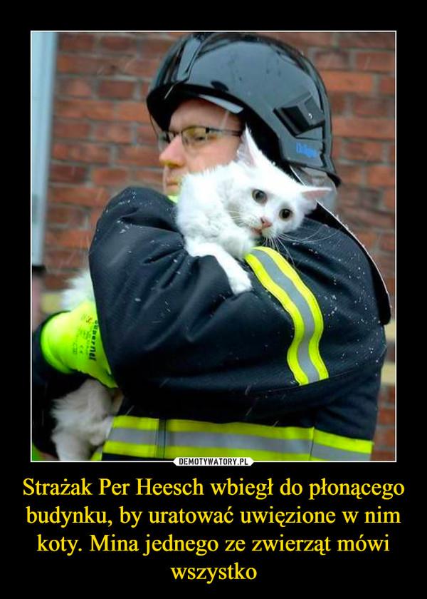 Strażak Per Heesch wbiegł do płonącego budynku, by uratować uwięzione w nim koty. Mina jednego ze zwierząt mówi wszystko –