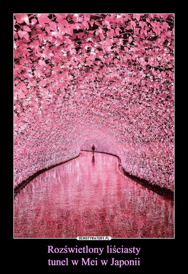 Rozświetlony liściastytunel w Mei w Japonii –