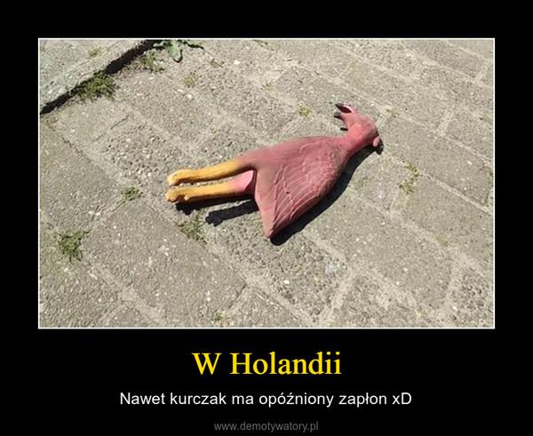 W Holandii – Nawet kurczak ma opóźniony zapłon xD