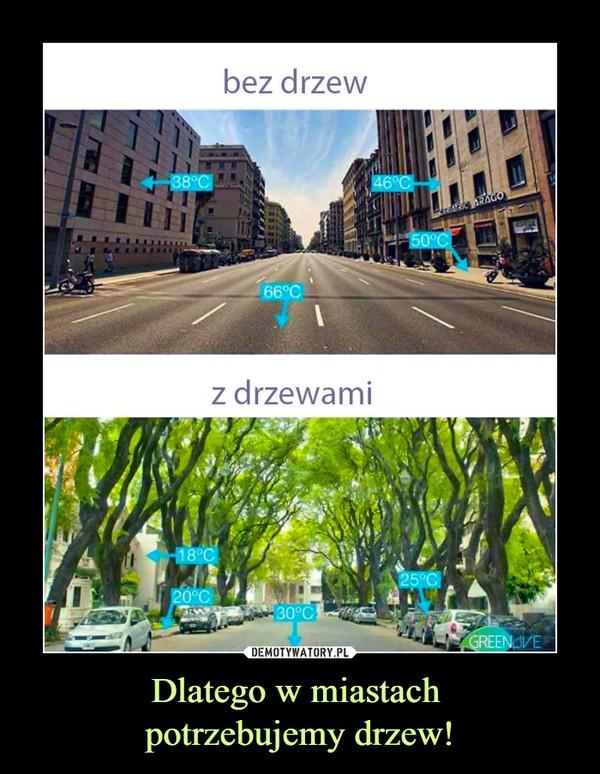 Dlatego w miastach potrzebujemy drzew! –  bez drzew z drzewami