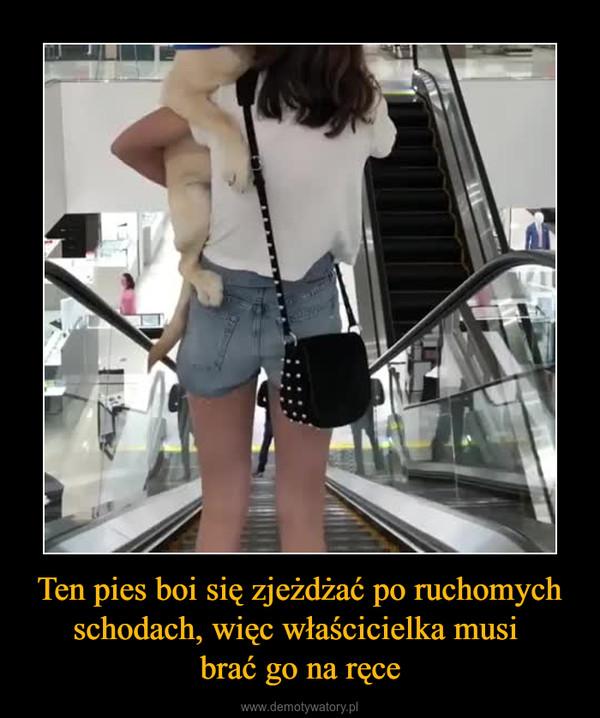 Ten pies boi się zjeżdżać po ruchomych schodach, więc właścicielka musi brać go na ręce –