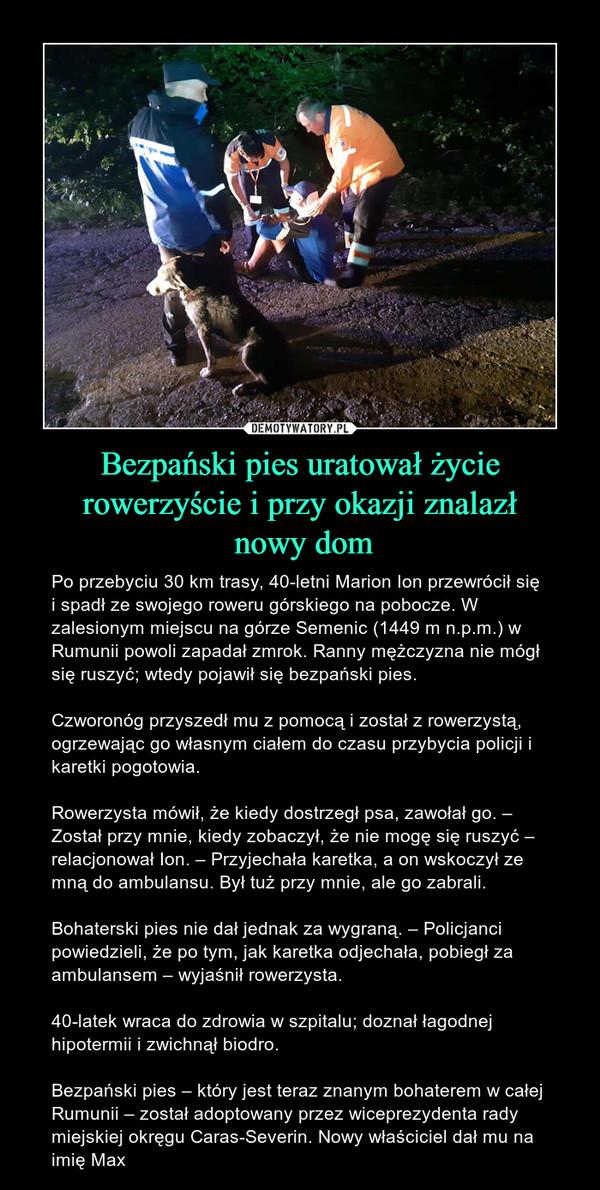 Bezpański pies uratował życie rowerzyście i przy okazji znalazł nowy dom – Po przebyciu 30 km trasy, 40-letni Marion Ion przewrócił się i spadł ze swojego roweru górskiego na pobocze. W zalesionym miejscu na górze Semenic (1449 m n.p.m.) w Rumunii powoli zapadał zmrok. Ranny mężczyzna nie mógł się ruszyć; wtedy pojawił się bezpański pies.Czworonóg przyszedł mu z pomocą i został z rowerzystą, ogrzewając go własnym ciałem do czasu przybycia policji i karetki pogotowia.Rowerzysta mówił, że kiedy dostrzegł psa, zawołał go. – Został przy mnie, kiedy zobaczył, że nie mogę się ruszyć – relacjonował Ion. – Przyjechała karetka, a on wskoczył ze mną do ambulansu. Był tuż przy mnie, ale go zabrali.Bohaterski pies nie dał jednak za wygraną. – Policjanci powiedzieli, że po tym, jak karetka odjechała, pobiegł za ambulansem – wyjaśnił rowerzysta.40-latek wraca do zdrowia w szpitalu; doznał łagodnej hipotermii i zwichnął biodro.Bezpański pies – który jest teraz znanym bohaterem w całej Rumunii – został adoptowany przez wiceprezydenta rady miejskiej okręgu Caras-Severin. Nowy właściciel dał mu na imię Max