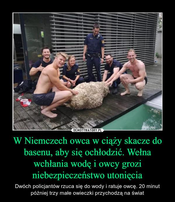 W Niemczech owca w ciąży skacze do basenu, aby się ochłodzić. Wełna wchłania wodę i owcy grozi niebezpieczeństwo utonięcia – Dwóch policjantów rzuca się do wody i ratuje owcę. 20 minut później trzy małe owieczki przychodzą na świat