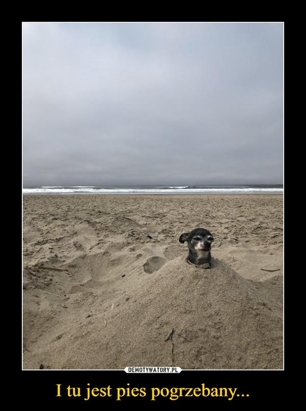 I tu jest pies pogrzebany... –