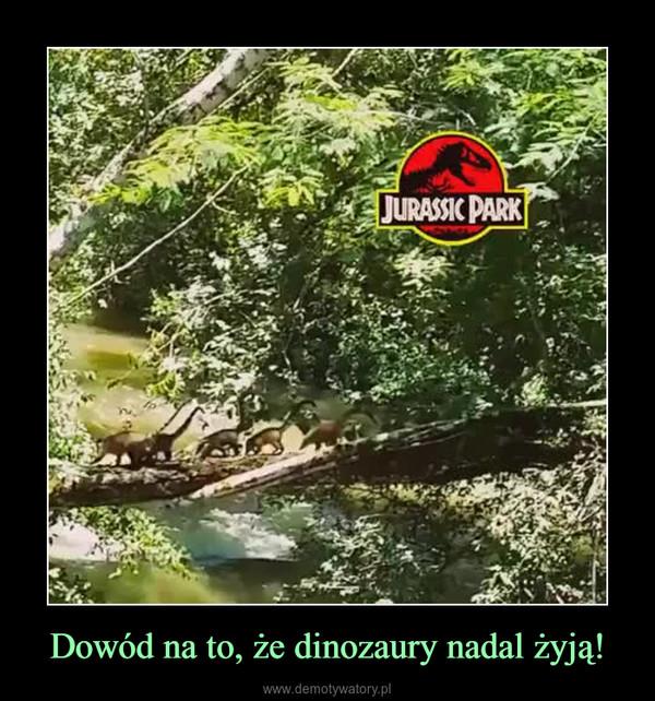 Dowód na to, że dinozaury nadal żyją! –