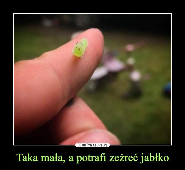 Taka mała, a potrafi zeżreć jabłko –