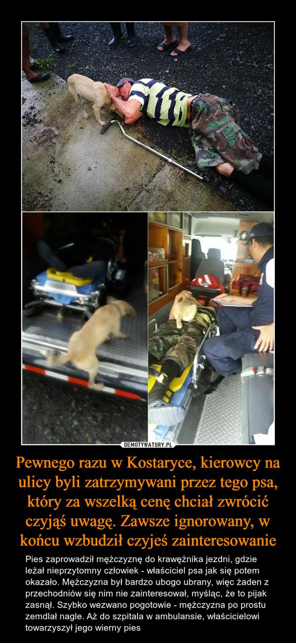 Pewnego razu w Kostaryce, kierowcy na ulicy byli zatrzymywani przez tego psa, który za wszelką cenę chciał zwrócić czyjąś uwagę. Zawsze ignorowany, w końcu wzbudził czyjeś zainteresowanie – Pies zaprowadził mężczyznę do krawężnika jezdni, gdzie leżał nieprzytomny człowiek - właściciel psa jak się potem okazało. Mężczyzna był bardzo ubogo ubrany, więc żaden z przechodniów się nim nie zainteresował, myśląc, że to pijak zasnął. Szybko wezwano pogotowie - mężczyzna po prostu zemdlał nagle. Aż do szpitala w ambulansie, właścicielowi towarzyszył jego wierny pies