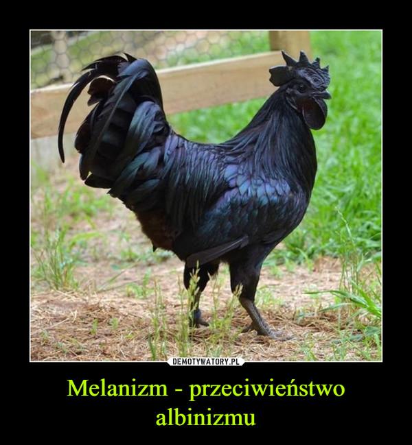 Melanizm - przeciwieństwo albinizmu –