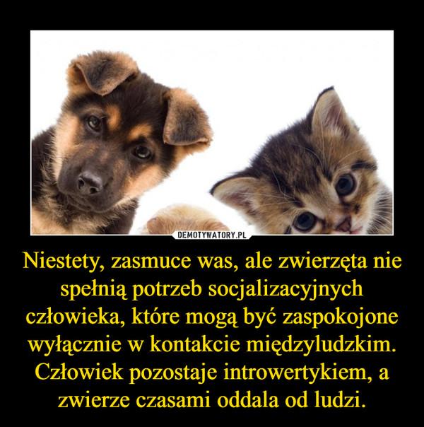Niestety, zasmuce was, ale zwierzęta nie spełnią potrzeb socjalizacyjnych człowieka, które mogą być zaspokojone wyłącznie w kontakcie międzyludzkim. Człowiek pozostaje introwertykiem, a zwierze czasami oddala od ludzi. –