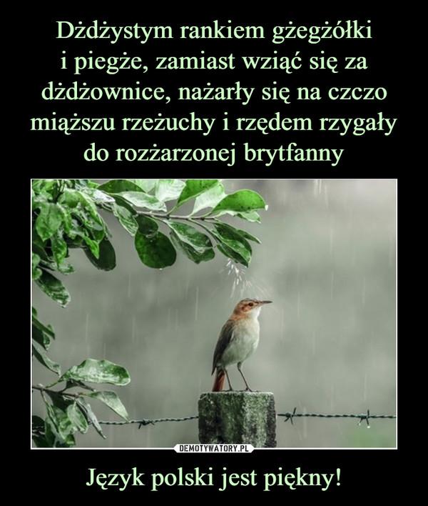 Język polski jest piękny! –