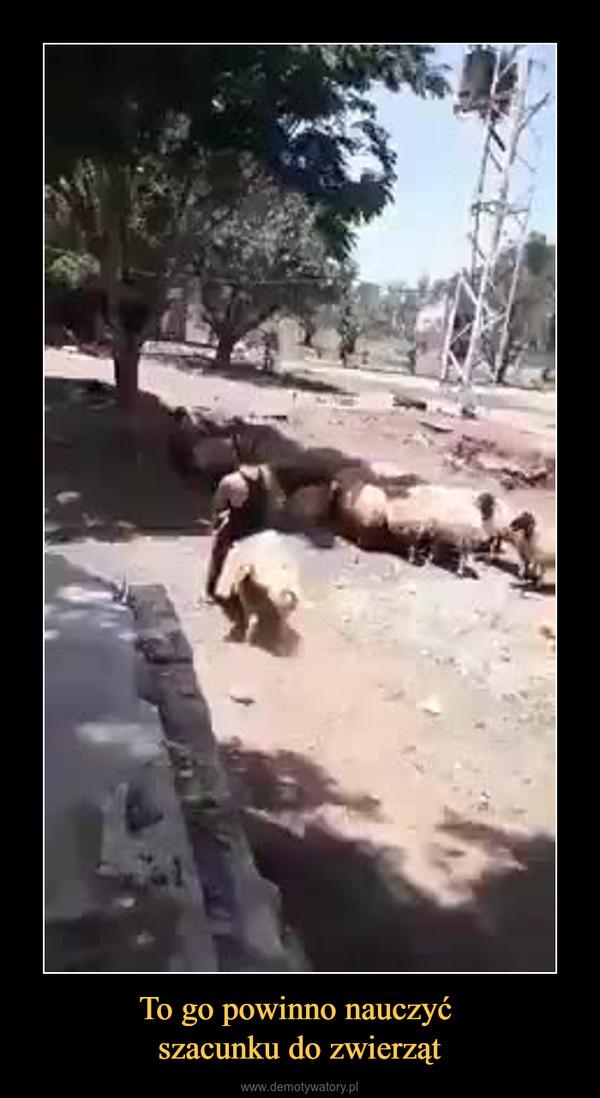 To go powinno nauczyć szacunku do zwierząt –