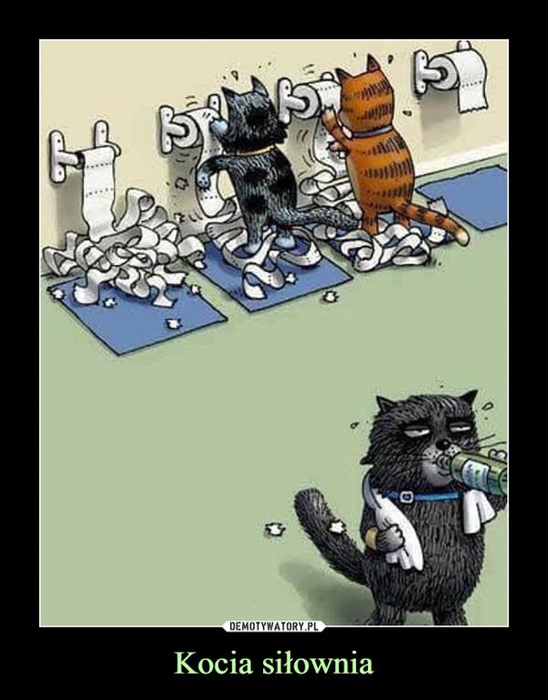 Kocia siłownia –