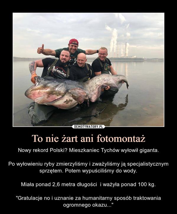 """To nie żart ani fotomontaż – Nowy rekord Polski? Mieszkaniec Tychów wyłowił giganta.Po wyłowieniu ryby zmierzyliśmy i zważyliśmy ją specjalistycznym sprzętem. Potem wypuściliśmy do wody.Miała ponad 2,6 metra długości  i ważyła ponad 100 kg.""""Gratulacje no i uznanie za humanitarny sposób traktowania ogromnego okazu..."""""""