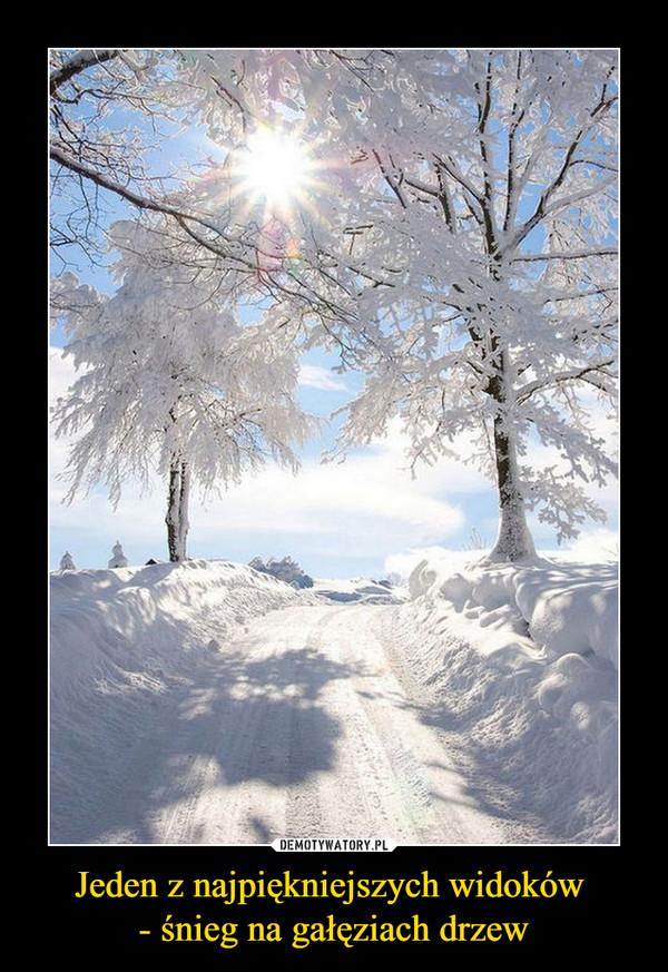 Jeden z najpiękniejszych widoków - śnieg na gałęziach drzew –