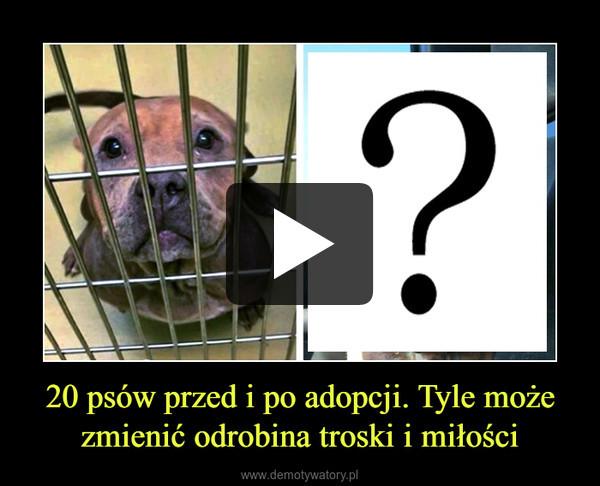 20 psów przed i po adopcji. Tyle może zmienić odrobina troski i miłości –