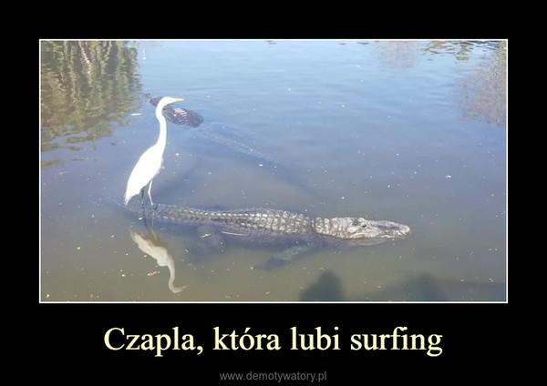 Czapla, która lubi surfing –