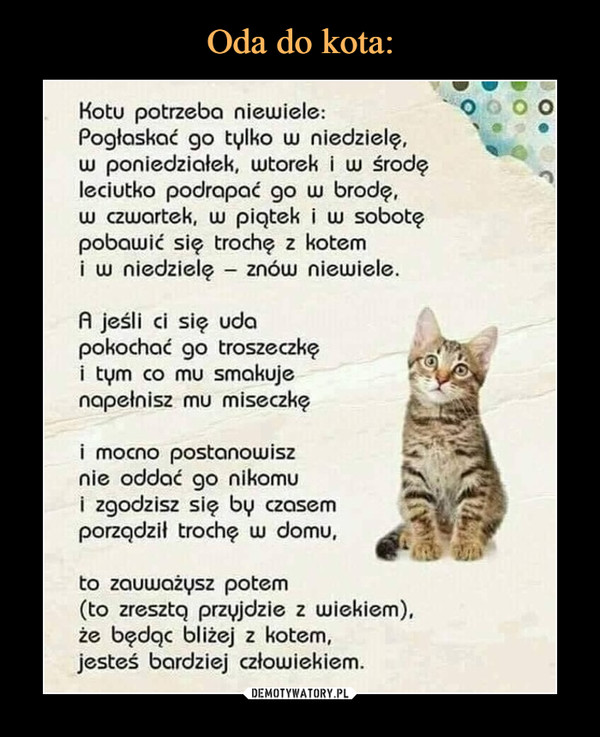 –  Kotu potrzeba niewiele: Pogłaskać go tylko w niedzielę, w poniedziałek, wtorek i w środę leciutko podrapać go w brodę, w czwartek, w piątek i w sobotę pobawić się trochę z kotem i w niedzielę - znów niewiele. A jeśli ci się uda pokochać go troszeczkę i tym co mu smakuje napełnisz mu miseczkę i mocno postanowisz nie oddać go nikomu i zgodzisz się by czasem porządził trochę w domu,