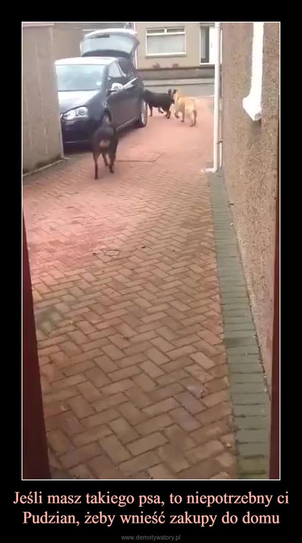 Jeśli masz takiego psa, to niepotrzebny ci Pudzian, żeby wnieść zakupy do domu –