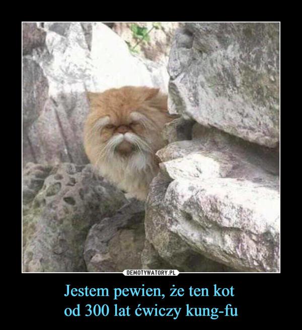Jestem pewien, że ten kot od 300 lat ćwiczy kung-fu –
