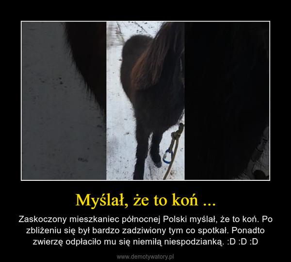 Myślał, że to koń ... – Zaskoczony mieszkaniec północnej Polski myślał, że to koń. Po zbliżeniu się był bardzo zadziwiony tym co spotkał. Ponadto zwierzę odpłaciło mu się niemiłą niespodzianką. :D :D :D