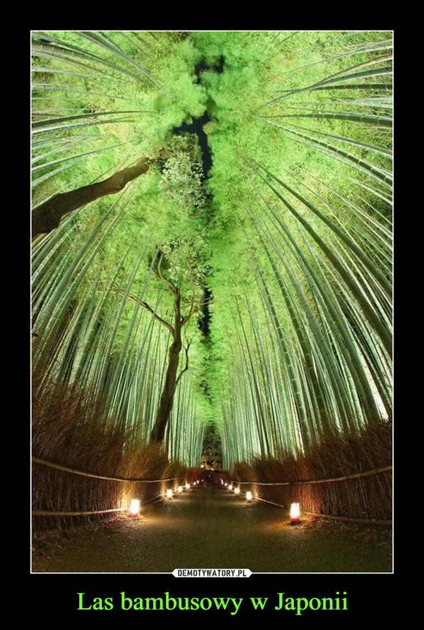 Las bambusowy w Japonii –