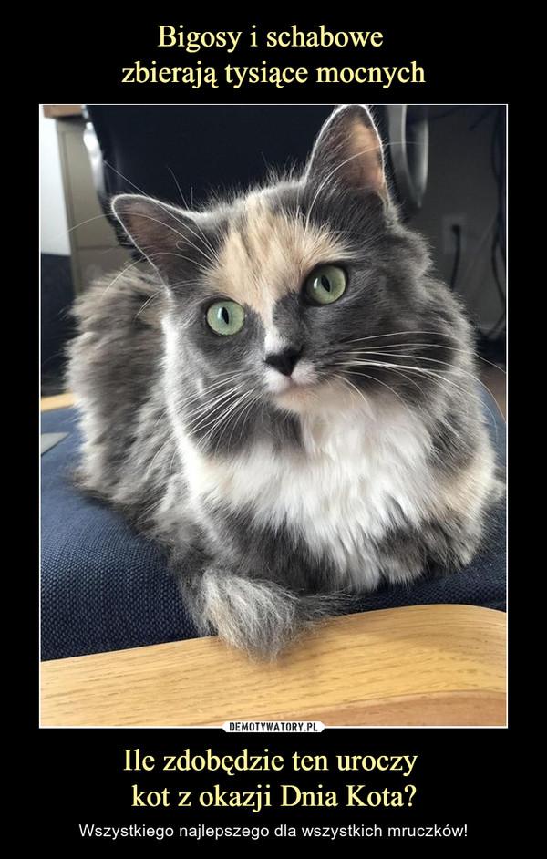 Ile zdobędzie ten uroczy kot z okazji Dnia Kota? – Wszystkiego najlepszego dla wszystkich mruczków!