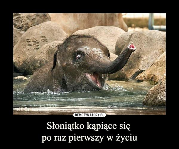 Słoniątko kąpiące się po raz pierwszy w życiu –