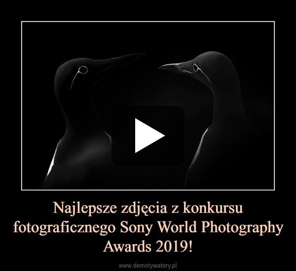 Najlepsze zdjęcia z konkursu fotograficznego Sony World Photography Awards 2019! –