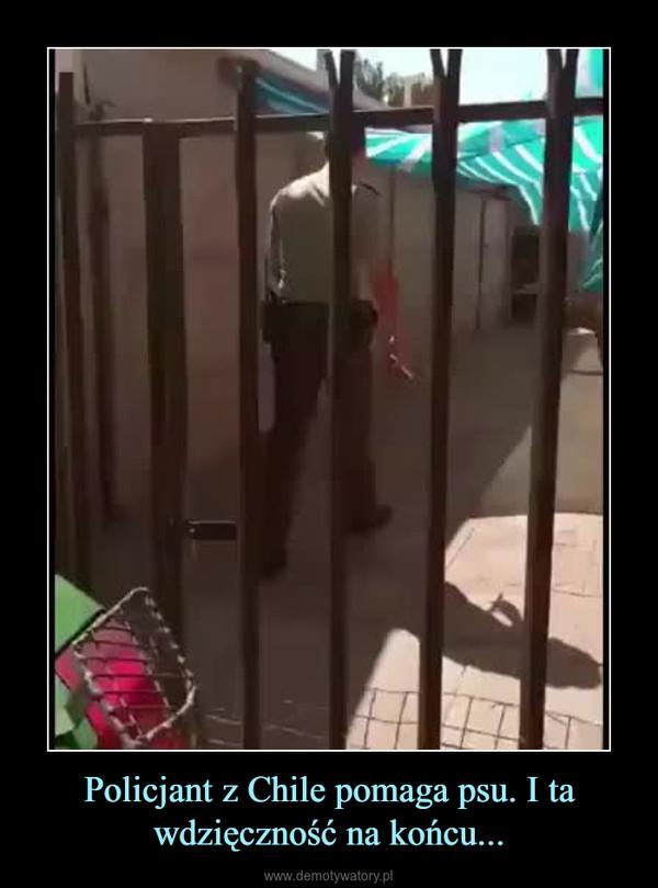 Policjant z Chile pomaga psu. I ta wdzięczność na końcu... –