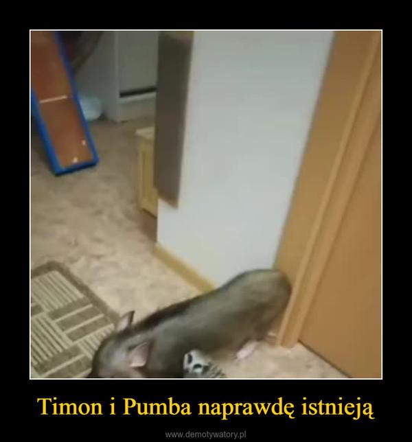 Timon i Pumba naprawdę istnieją –