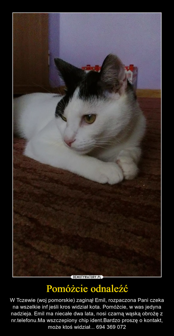 Pomóżcie odnaleźć – W Tczewie (woj pomorskie) zaginął Emil, rozpaczona Pani czeka na wszelkie inf jeśli kros widział kota. Pomóżcie, w was jedyna nadzieja. Emil ma niecałe dwa lata, nosi czarną wąską obrożę z nr.telefonu.Ma wszczepiony chip ident.Bardzo proszę o kontakt, może ktoś widział... 694 369 072