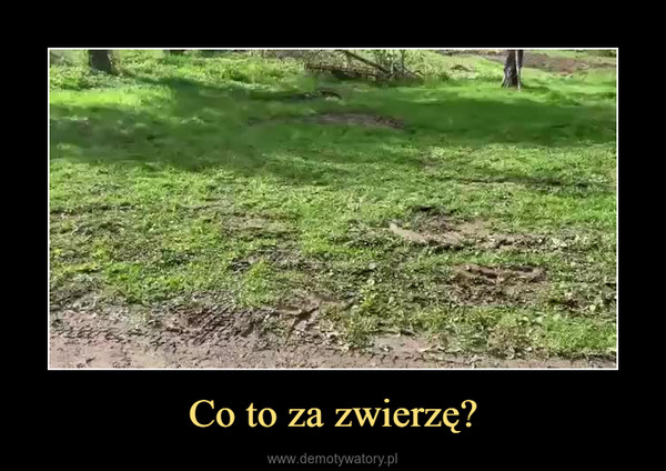 Co to za zwierzę? –