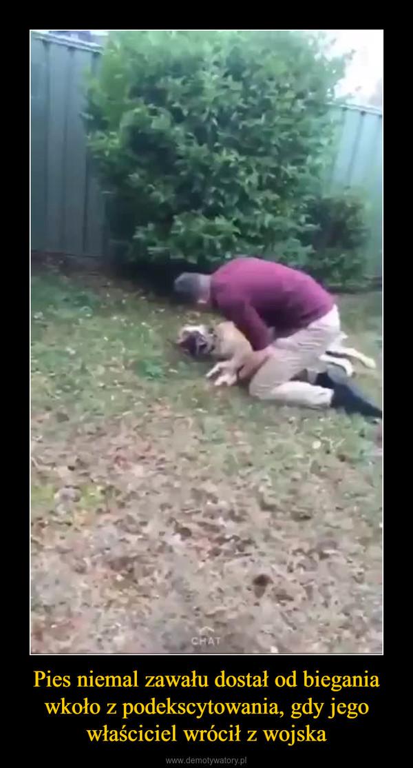 Pies niemal zawału dostał od biegania wkoło z podekscytowania, gdy jego właściciel wrócił z wojska –