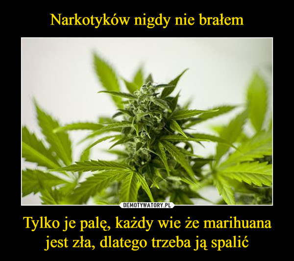 Tylko je palę, każdy wie że marihuana jest zła, dlatego trzeba ją spalić –