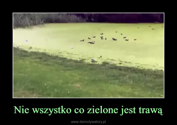 Nie wszystko co zielone jest trawą –