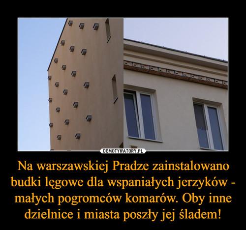 Na warszawskiej Pradze zainstalowano budki lęgowe dla wspaniałych jerzyków - małych pogromców komarów. Oby inne dzielnice i miasta poszły jej śladem!
