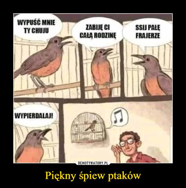 Piękny śpiew ptaków –