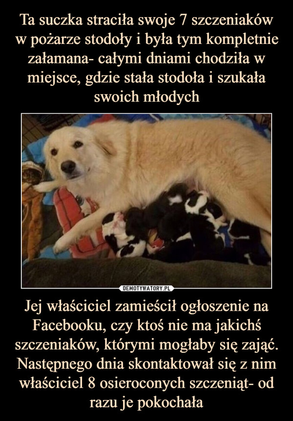 Jej właściciel zamieścił ogłoszenie na Facebooku, czy ktoś nie ma jakichś szczeniaków, którymi mogłaby się zająć. Następnego dnia skontaktował się z nim właściciel 8 osieroconych szczeniąt- od razu je pokochała –