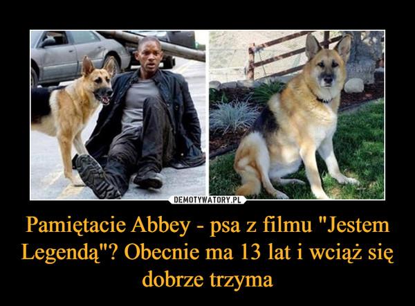 """Pamiętacie Abbey - psa z filmu """"Jestem Legendą""""? Obecnie ma 13 lat i wciąż się dobrze trzyma –"""