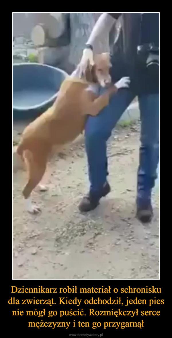 Dziennikarz robił materiał o schronisku dla zwierząt. Kiedy odchodził, jeden pies nie mógł go puścić. Rozmiękczył serce mężczyzny i ten go przygarnął –